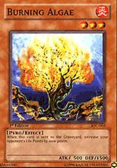 Burning Algae - IOC-062 - Common - Unlimited Edition on Channel Fireball