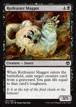 Rotfeaster Maggot