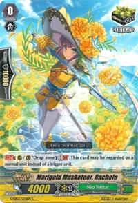 Marigold Musketeer, Rachele - G-EB02/076EN - C