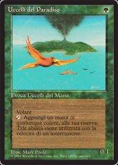 Birds of Paradise - Italian