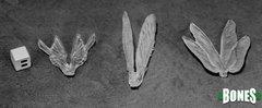 Transparent Wings (3)