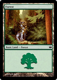 Forest (43)