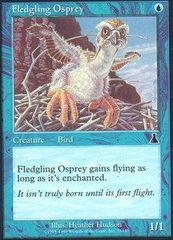 Fledgling Osprey - Foil