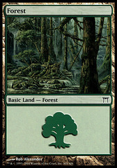 Forest (305)